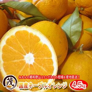 和歌山県紀南の 国産 ネーブルオレンジ 4.5kg (約12玉〜20玉)【 送料無料 】《 訳あり 》 甘い 柑橘 果物 フルーツ 糖度 産地直送 ノーワックス 防腐剤 不使用