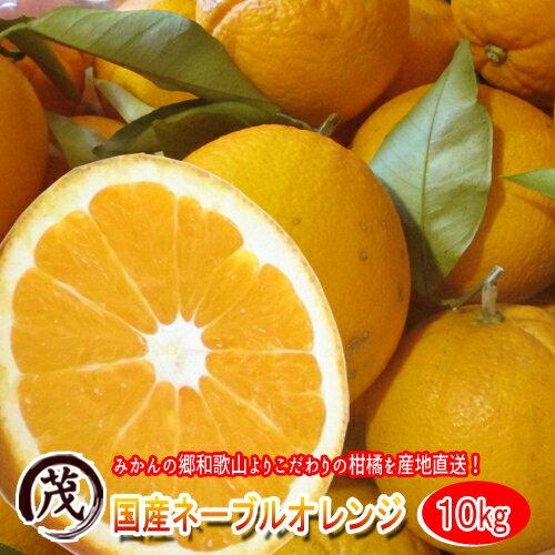 和歌山県紀南の 国産 ネーブルオレンジ 10kg (約26玉〜45玉) 訳あり 送料無料 (一部地域除く) 甘い 柑橘 果物 フルーツ 糖度 産地直送 ノーワックス 防腐剤 不使用