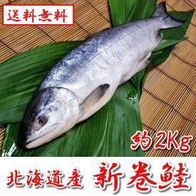 【送料無料】 新巻鮭 2kg前後 1本 化粧箱入り 北海道産 秋鮭 お取り寄せ ギフト 贈り物 おすすめ 【ハクダイ食品】