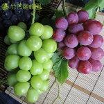 愛媛県内子町産ぶどう竹内巨峰園のクイーンニーナとシャインマスカット(贈答用)