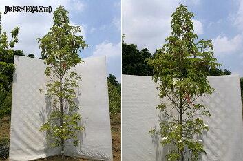 樹形:jtd25-10