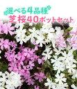 【良苗】選べる4品種 芝桜(シバザクラ)40ポットセット(10個×4品種) 9cmポット苗【送料無料】
