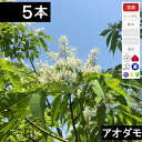 ◆送料無料◆【5本】 アオダモ苗木 高さ30cm〜50cm程度◆【6か月枯れ保証付き】
