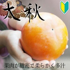 【柿苗木】太秋2年生 高さ0.7〜1.0m
