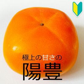 【柿苗木】陽豊(ようほう)2年生 高さ0.7〜1.0m