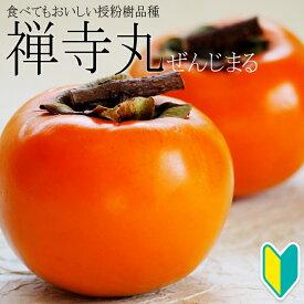 【柿苗木】禅寺丸(ぜんじまる)1年生 高さ0.7〜1.0m