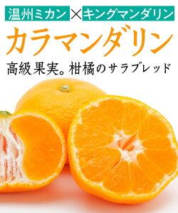【柑橘苗木】カラマンダリン 1年生 高さ70cm〜1.0m