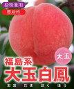 【桃苗木】福島系大玉白鳳 2年生 高さ70cm〜1.0m