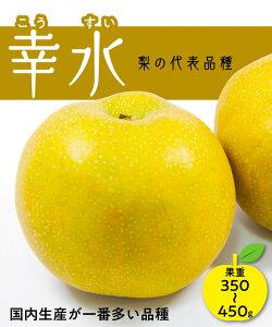 【梨苗木】幸水 1年生 高さ70cm〜1.0m