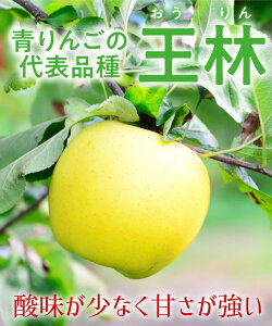 【リンゴ苗木】【2年生苗】王林(おうりん) 高さ70cm〜1.0m