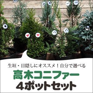 高木コニファー4ポットセット