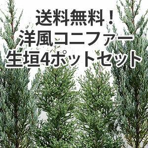 送料無料!洋風コニファー生垣4ポットセット
