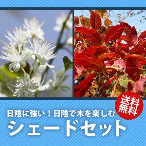 【送料無料】【6カ月枯れ保証】日陰に強い!日陰で植木を楽しむ!シェードセット