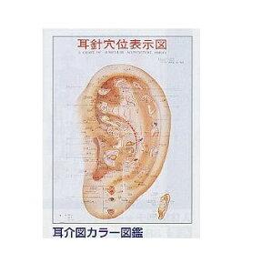 【感謝価格】耳介図カラー図鑑