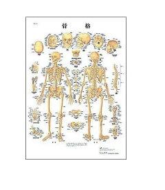 【感謝価格】世界基準 3Bサイエンフィティック社医学チャート・日本語版、B2ポスター「骨格」