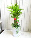 【送料無料!】 観葉植物ギフト ミリオンバンブー華やか寄せ植え