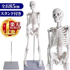 人体模型 人体骨格模型 全身 骨格可動 85cm 人体骨格 脊椎 胸椎 腰椎 骨格 標本 学習教材 ヒューマンスカル スカル 骸骨 がいこつ スタンド付き 可動式 美術 インテリア オブジェ デッサン 病院 クリニック おもちゃ 送料無料