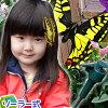 Solar motion Butterfly solar powered garden flatter what color butterflies arrive, or enjoy ♪ butterfly garden accessories gardening solar motion ★ ★ □ □