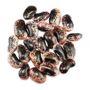紫花豆特大 国産群馬県嬬恋村産 業務用5Kg 高原花豆 大粒 むらさきはなまめ はな豆 乾物豆類 おせち料理などの煮豆、甘煮、甘納豆などお正月お豆 つまみ