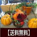 バラを使ったミニアレンジ!ハロウィンバージョン♪【秋 生花 アレンジメント フラワーギフト お誕生日 花 プレゼント…