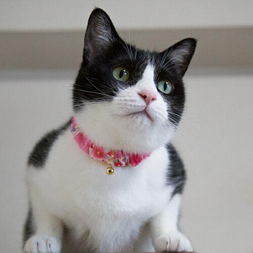 子猫〜成猫用シュシュ猫首輪ゆかたセーフティシュシュゴムフェレットにも