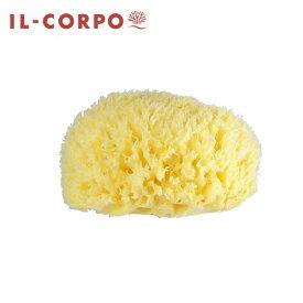 イタリア産最高級天然海綿イルコルポ ナチュラルシースポンジ 直径約14cm