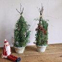 【数量限定】 富良野の白樺と針葉樹のクリスマスツリー レッド ホワイト ◆ シンプル / ドライフラワー クリスマス飾り