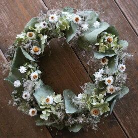 【 送料無料 】ユーカリとアンモビュームのグリーンリース◆ナチュラルなグリーンと白の春にぴったり爽やかリース * ドライフラワー 新築祝い 誕生日 母の日 ウェディング 結婚祝い クリスマス シンプル インテリア ナチュラル