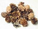 グイの実ナチュラル 少量パック/木の実・クリスマス・花材・素材・ドライフラワー・リース(大地農園)