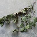 ユーカリ*ポポラスリーフ/ ドライフラワー ナチュラル グリーン インテリア 素材 材料 国産