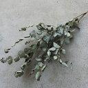 ユーカリ*シルバーウェーブ / ドライフラワー ナチュラル グリーン インテリア 素材 材料 国産