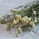アキレアパール / 北海道産 ドライフラワー 花材 リース 手作り 国産 材料 素材 ナチュラル インテリア ディスプレイ クリーム かわい…