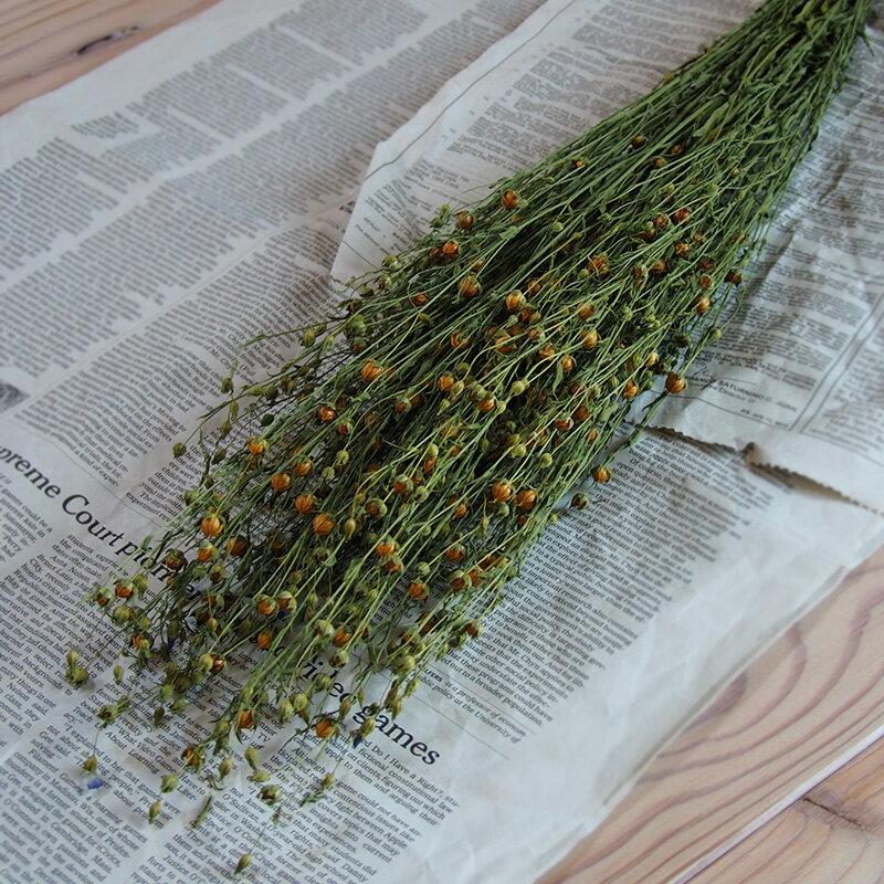 アマ / 亜麻 あま リンフラワー / 北海道産 ドライフラワー 花材 リース 手作り 国産 材料 素材 ナチュラル インテリア シンプル グリーン