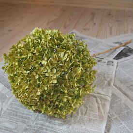 アナベル枝つき 【大】/アジサイ あじさい/国産ドライフラワー 花材 リース 手作り インテリア ナチュラル 材料 素材 グリーン