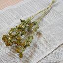 アルケミラモリスS / ドライフラワー 花材 リース 手作り 材料 素材 ナチュラル インテリア 国産 北海道産 ディスプレイ