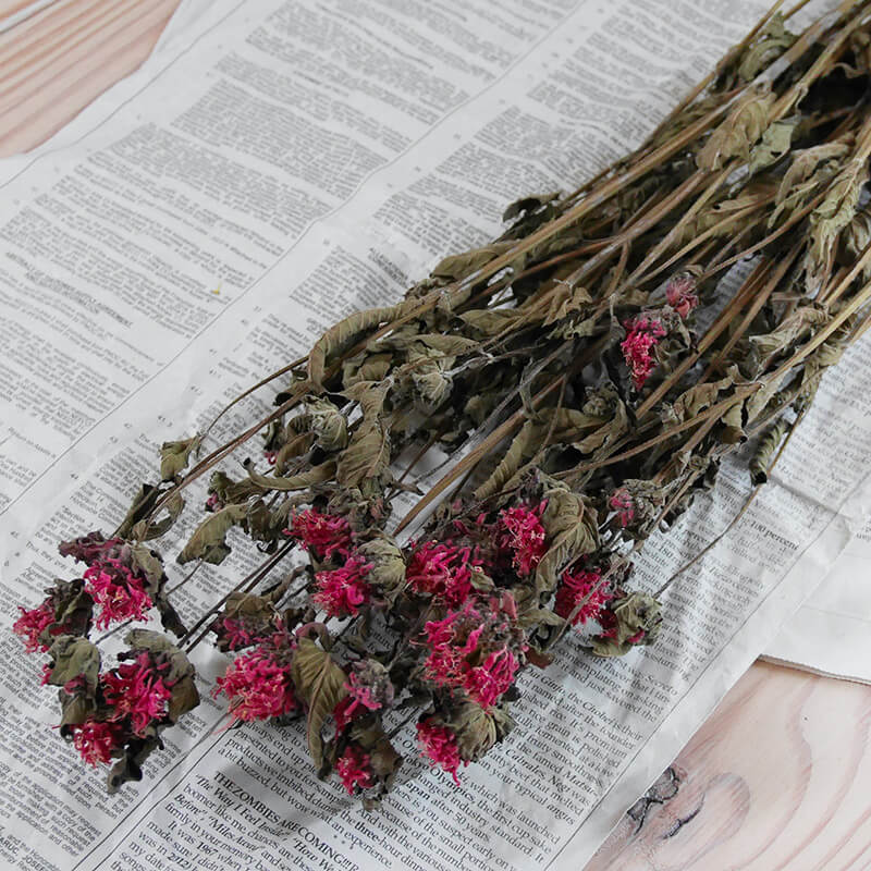ベルガモット * モナルダ / 北海道産 ドライフラワー 花材 リース 手作り 国産 材料 素材 ナチュラル インテリア ハーブ ピンク