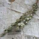 フェイジョア ◆ ドライフラワー ナチュラル グリーン インテリア 素材 材料 葉物 シルバーリーフ 葉っぱ