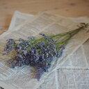 リモニューム HB モンタナ / ドライフラワー 花材 リース 手作り 国産 材料 素材 ナチュラル インテリア ブルー 紫 ディスプレイ スターチス
