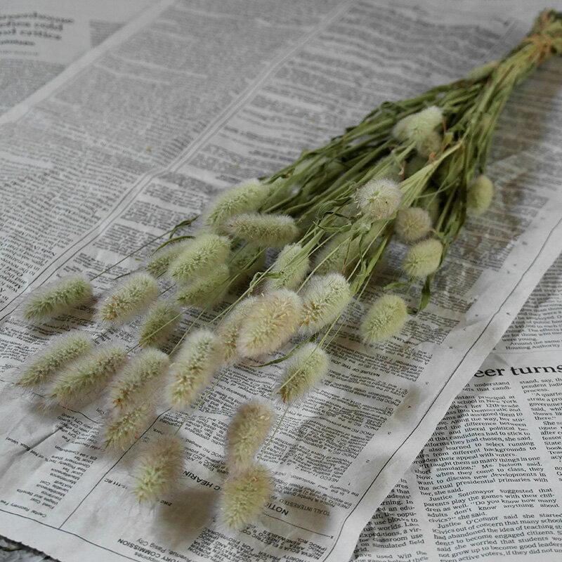 ラグラス * うさぎのしっぽ ドライフラワー / 北海道産 花材 リース 手作り 国産 材料 素材 ナチュラル インテリア グリーン かわいい