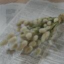 ミニラグラス * うさぎのしっぽ / 北海道産 ドライフラワー 花材 リース 手作り 国産 材料 素材 ナチュラル インテリア グリーン 穂もの
