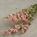 ラークスパー ( ちどり草 ) ソフトピンク 淡いピンク 桃色 / 北海道産 ドライフラワー 花材 リース 手作り 国産 材料 素材 ナチュラル インテリア