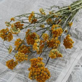 ローナス / 北海道産 ドライフラワー 花材 リース 手作り 国産 材料 素材 ナチュラル インテリア ハーブ 黄色 イエロー