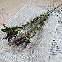 リューカデンドロン マゼンタサンセット / ドライフラワー 花材 リース 手作り 材料 素材 ナチュラル インテリア ディ…