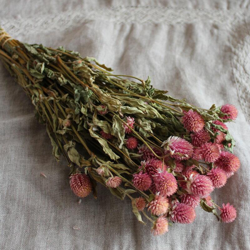 千日紅ピンク / 北海道産ドライフラワー 花材 リース 手作り 国産 材料 素材 ナチュラル インテリア