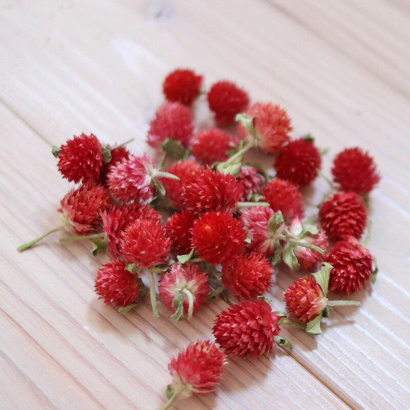 千日紅 ストロベリーフィールド ヘッド / 赤 レッド 北海道産ドライフラワー ナチュラル インテリア 花材 素材 材料 リース かわいい