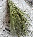 スモークグラス / ドライフラワー 北海道産 インテリア ナチュラル グリーン 穂もの