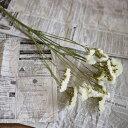 スターチス ホワイト S/ ドライフラワー 花材 リース 手作り 国産 材料 素材 ナチュラル インテリア
