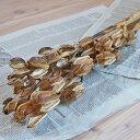 ウバユリ ( 姥百合 ) / 北海道産 ドライフラワー 花材 リース 手作り 国産 材料 素材 ナチュラル インテリア ディスプ…