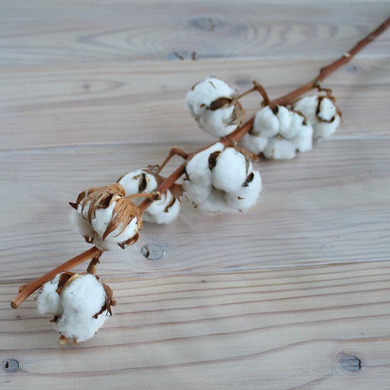 綿の実枝つき ホワイト / コットンフラワー リース 花材 クリスマス 素材 ドライフラワー 材料 綿花 インテリア ナチュラル