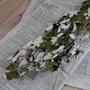 ホワイトポプラ ( ギンドロ ) / 北海道産 ドライフラワー 花材 リース 手作り 国産 材料 素材 ナチュラル インテリア …